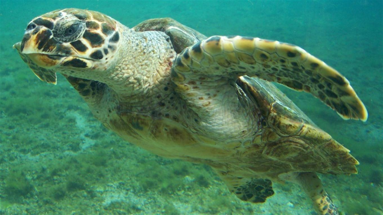 7 especies en peligro cr tico de extinci n el nuevo d a - Nacionalidad de puerto rico en ingles ...