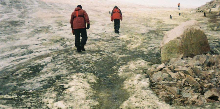 Los bancos de musgo están respondiendo al cambio climático en toda la Antártica. (horizontal-x3)