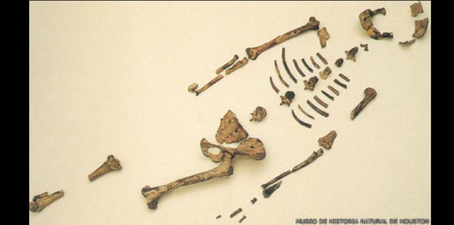 Fósil de millones de años revela origen de columna vertebral en ...