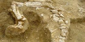 Descubren los restos de un enorme dinosaurio que tenía una cola en forma de corazón