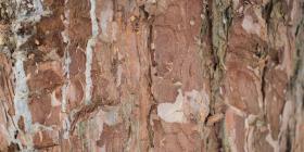 Este es el pegamento más antiguo del mundo y se utilizó durante 50,000 años