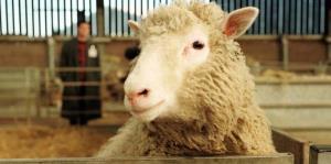 11 animales que la ciencia logró clonar
