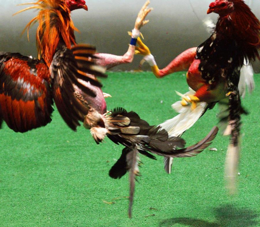 """La exhibición consta de tres partes tituladas """"La pasarela"""", """"La pelea"""" y """"La muerte"""". (Suministrada) (semisquare-x3)"""