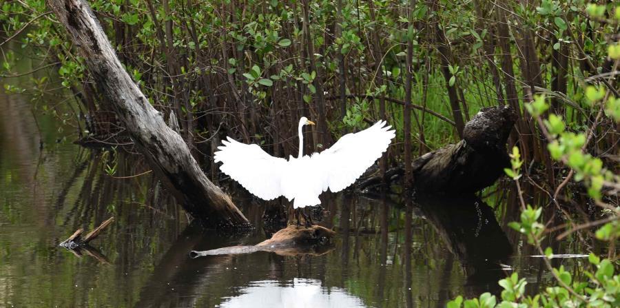 Un ave en la Laguna San José, cuerpo de agua que pertenece al Estudario de San Juan (horizontal-x3)