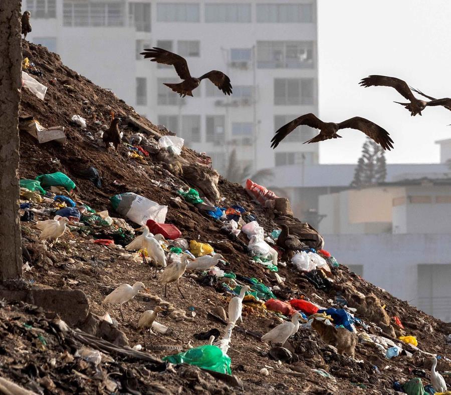 En la actualidad, el 33% de los alimentos van a la basura en los países desarrollados (semisquare-x3)