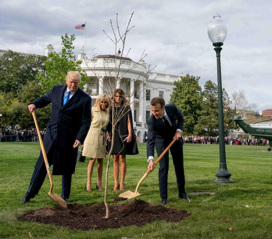 En esta fotografía de archivo del 23 de abril de 2018, Melania Trump, atrás a la derecha, y Brigitte Macron, atrás a la izquierda, observan cómo el presidente Donald Trump y su homólogo francés Emmanuel Macron participan en una ceremonia de plantación de (semisquare-x3)