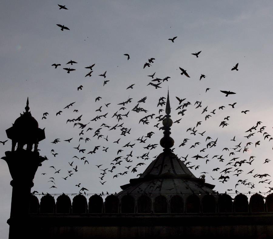 Mezquita Jama Masjida en la zona musulmana de la capital india (semisquare-x3)