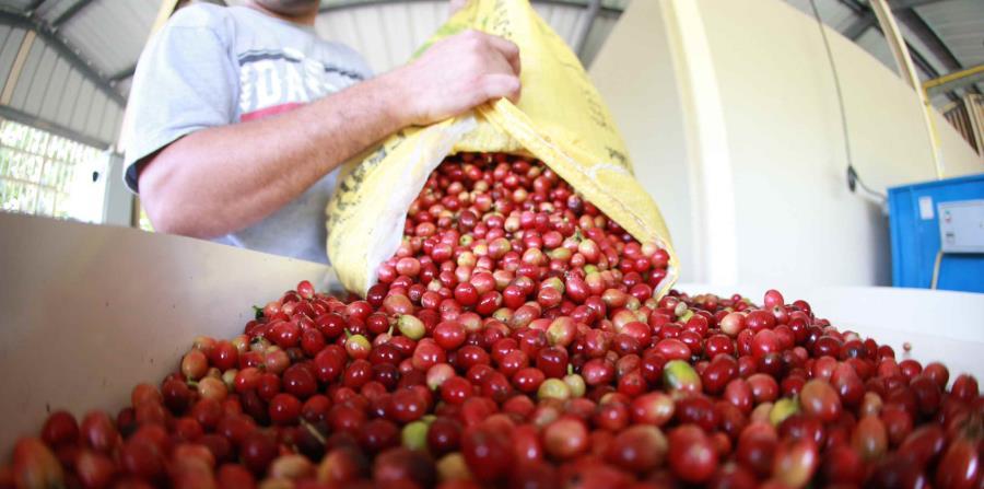 La importación de las semillas de café se dará en alianza con la Fundación Starbucks (horizontal-x3)