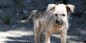 Advierten del peligro de los veterinarios fatulos
