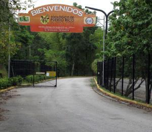 Activistas a favor de los animales le ripostan al alcalde de Mayagüez