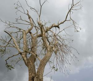 Capitalizar el árbol caído