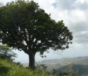 Proteger a los árboles que nos defienden