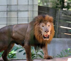 A salvar el zoológico
