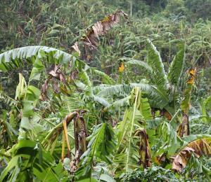 Apoyo crucial para el agro tras el huracán