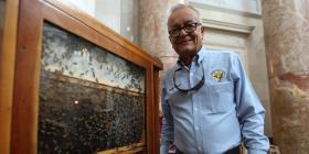 Proyecto de ley protegerá las abejas y la apicultura