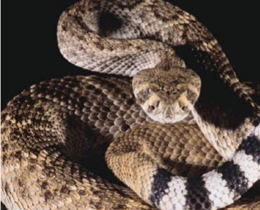 serpiente (semisquare-x3)