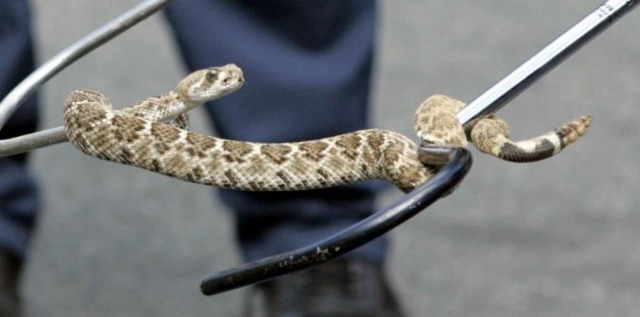 En las más de tres semanas que pasó solo, el menor  mostró una capacidad de supervivencia prodigiosa, siendo capaz de cazar serpientes y asarlas a la barbacoa. (horizontal-x3)
