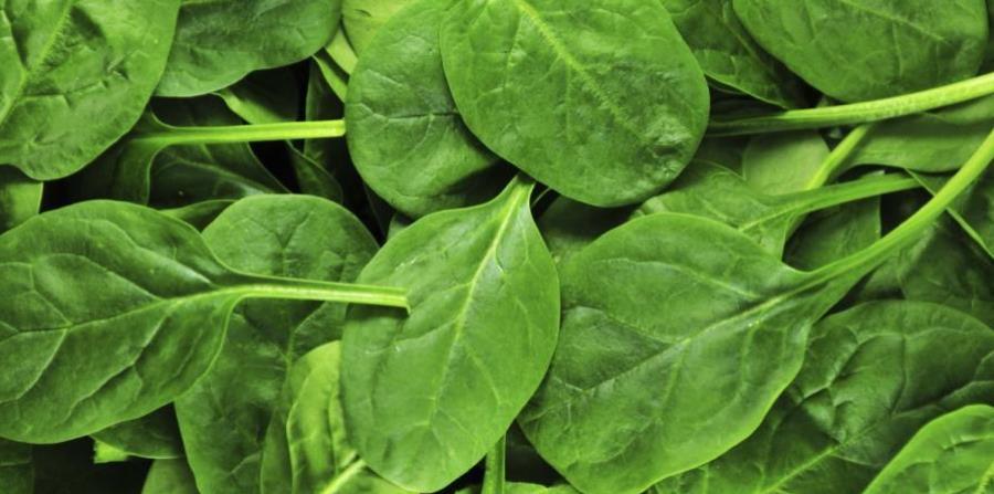Resuelven el misterio del tamaño de las hojas de las plantas | El ...