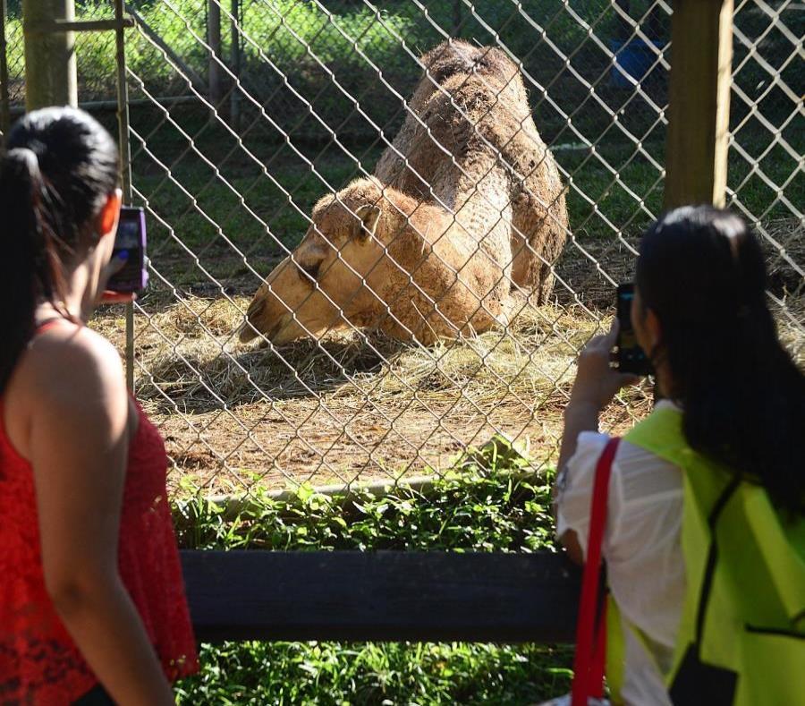 El zoológico permanece cerrado desde septiembre de 2017 (semisquare-x3)