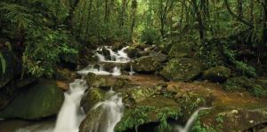 El Yunque reabrirá este miércoles