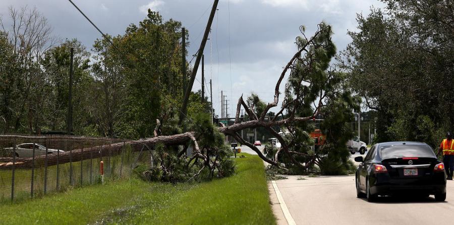 En la carretera Boogy Creek, en Kissimmee, cayó un árbol sobre el tendido eléctrico. (horizontal-x3)