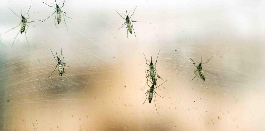 mosquitos (horizontal-x3)
