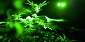 Canadá recauda $139 millones con la legalización de la marihuana