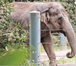 El elefante y la estaca