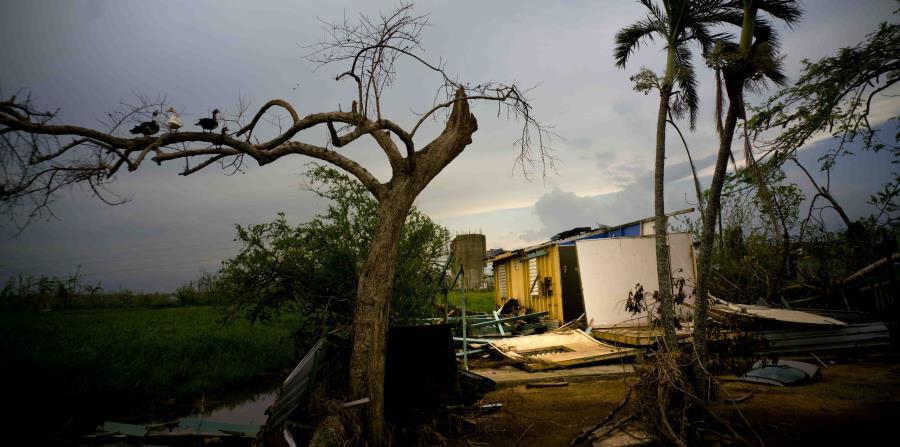 La antropóloga dijo que las personas se han sentido abandonada tras el huracán, aunque ya tenían expectativas bajas del gobierno debido a la quiebra del ELA (horizontal-x3)