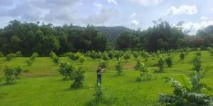 Ford subvenciona tres proyectos agrícolas en Puerto Rico