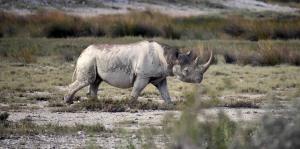Representantes de 180 naciones se reúnen para convención sobre protección a especies vulnerables