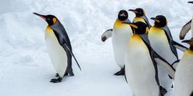 La NASA rastrea así desde el espacio a los pingüinos de la Antártida