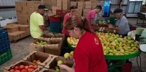 Voluntarios ayudan a salvar las cosechas en la zona suroeste
