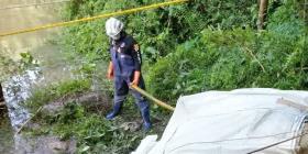 Recuperan a tres de los once elefantes muertos en una cascada de Tailandia