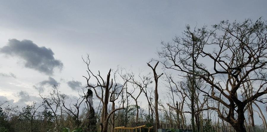 Desde la carretera, el Jardín Botánico de la UPR lucía destruido. (Mariela Fullana) (horizontal-x3)