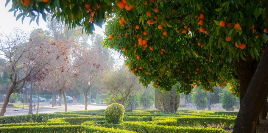El Parque de María Luisa, en Sevilla, fue declarado Bien de Interés Cultural. (Suministrada)