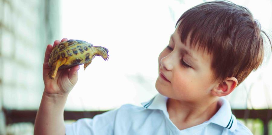 Niño con tortuga en las manos (horizontal-x3)