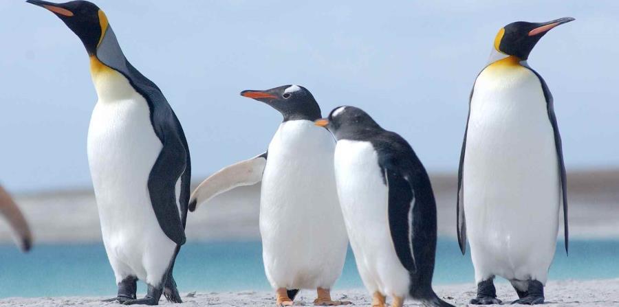 La participación privada en la conservación de los espacios y la protección de la naturaleza es habitual en Tierra del Fuego. (horizontal-x3)