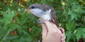 Proponen apartar área para proteger a pájaro raro en EE.UU.