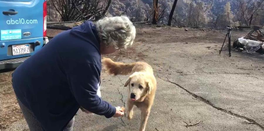 Cuando la dueña se reunió con su mascota, le trajo de regalo una caja de galletas de trigo fino, su golosina favorita. (AP) (horizontal-x3)