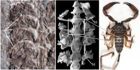 Encuentran el fósil de un escorpión prehistórico