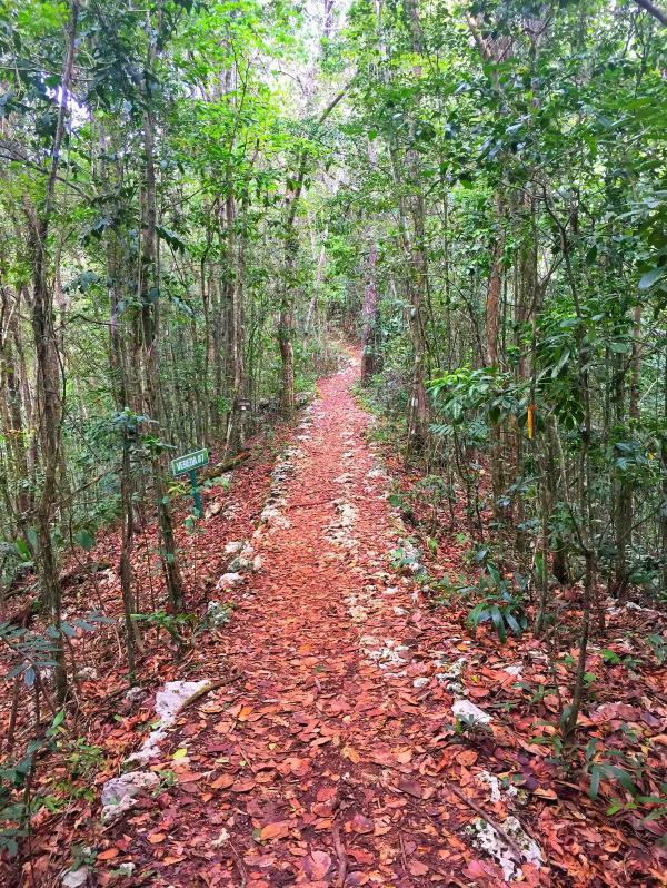 Bosque Estatal de Guajataca (Suministrada/@enjoyisabela)
