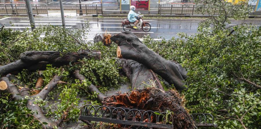 Transeúntes caminan junto a un árbol caído después del paso del tifón María en Taipei, Taiwán, (horizontal-x3)