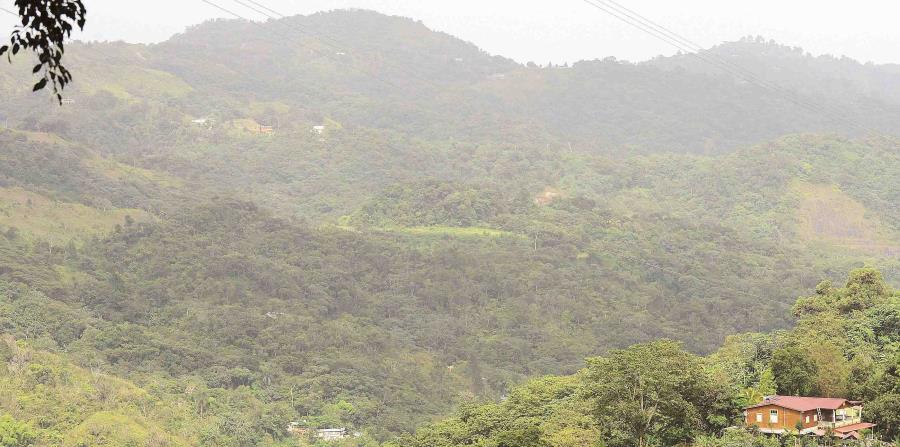 El Bosque Modelo cubre unas 390,000 cuerdas en 31 municipios e incorpora 19 reservas naturales. (horizontal-x3)