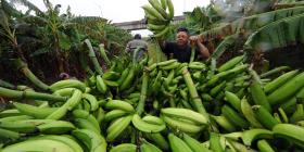 Aumentan las ventas de seguros agrícolas