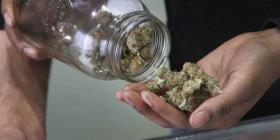 Se roban más de $20 mil en cannabis medicinal de un dispensario en Hatillo
