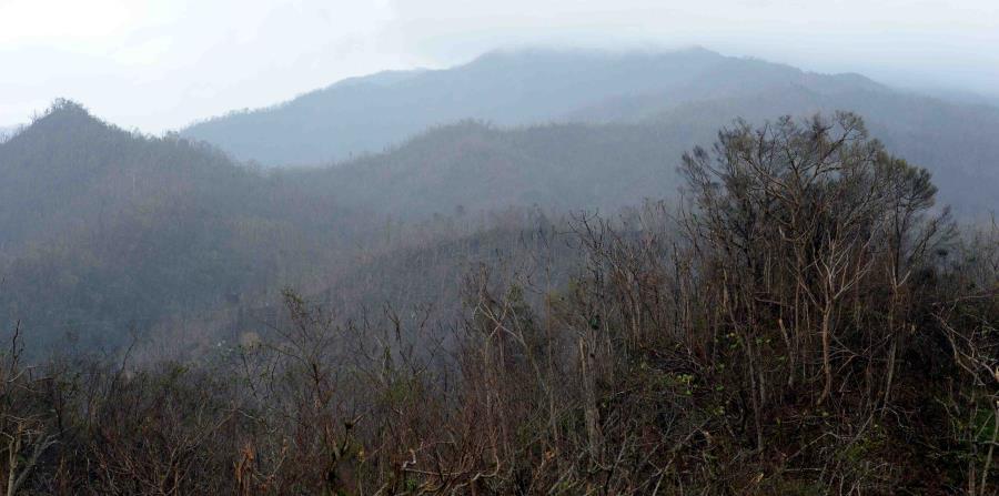 Como muchas áreas. las montañas de Jayuya quedaron devastadas por la furia de María. (horizontal-x3)