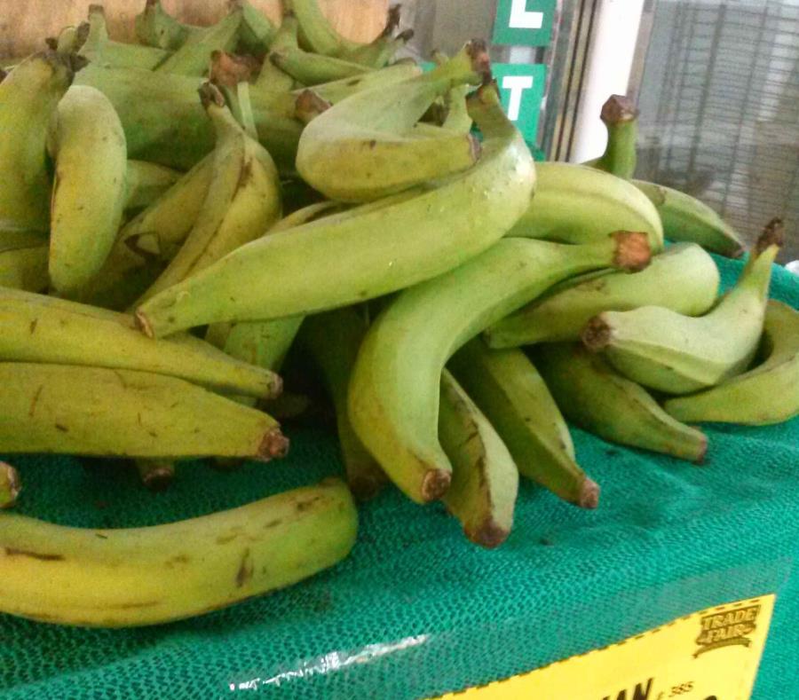 El septuagenario tiene una finca con una siembra de 3,000 plátanos. (GFR Media) (semisquare-x3)