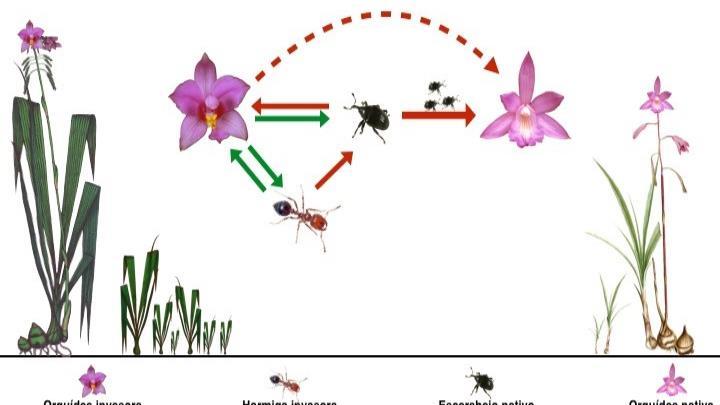 Interacciones estudiadas entre especies de orquídeas e insectos. (Suministrada)