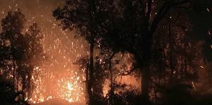 Kilauea, el volcán en Hawái que lanzó ríos de lava entre bosques